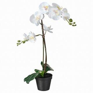 IKEA イケア 人工観葉植物 Orchid ホワイト 12x58cm m20294940 FEJKA