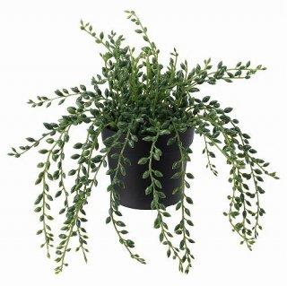 IKEA イケア 人工観葉植物 室内 屋外用 グリーンネックレス 9x20cm  m40395325 FEJKA