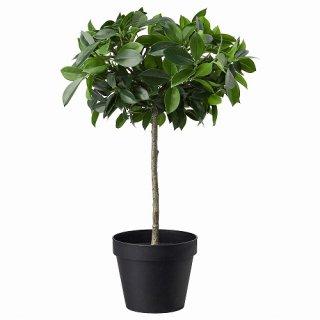 IKEA イケア 人工観葉植物 室内 屋外用 ベンジャミン 幹 12x44cm m90395304 FEJKA