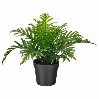 IKEA イケア 人工観葉植物 室内 屋外用 ポリポディウム 9x21cm m60493339 FEJKA