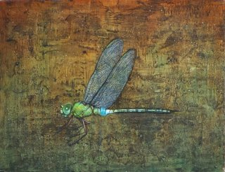 Dragonfly(A.parthenope)