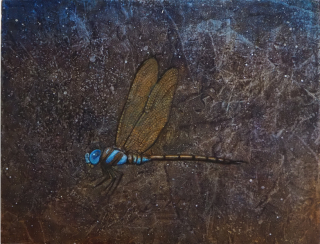 Dragonfly(A.martin)