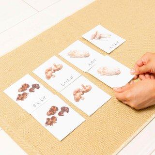 絵合わせのカード【菌類】《デジタルコンテンツ》
