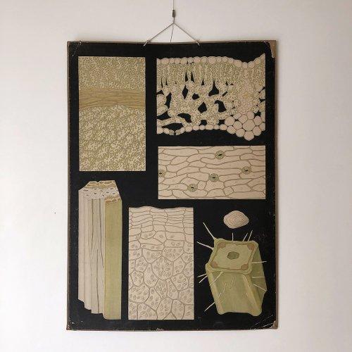 Plant Cells Illustration Board