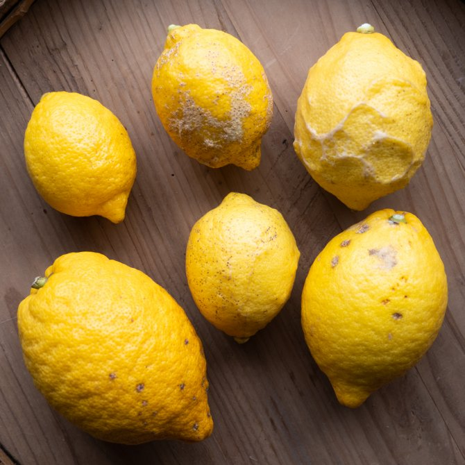 訳あってお得なレモン 1kg