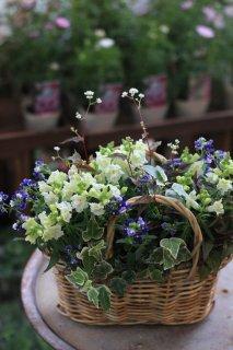 【オーダー】バスケットに季節のお花のブリコラージュフラワー
