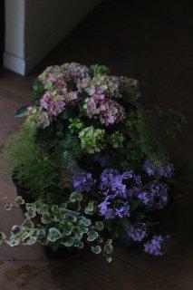 【花苗セット】紫陽花星あつめピンクとマルルーのブリコラージュフラワー
