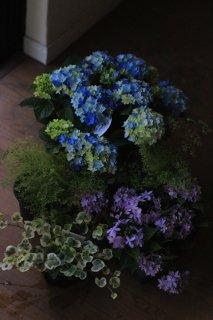 【花苗セット】紫陽花星あつめブルーとマルルーのブリコラージュフラワー