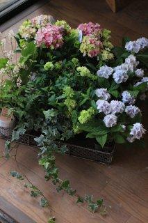 【花苗セット】紫陽花星あつめピンクと山アジサイ伊予獅子手毬ブルーのブリコラージュフラワー