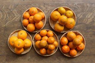 柑橘ミックス(5種)5kg | 生口島産 無農薬
