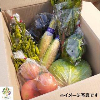 【とれたて野菜お届け便】お届け農産物セット(配送:旧津市内限定)