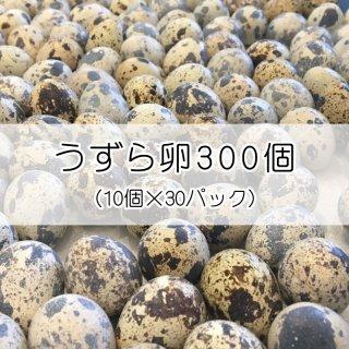 【浜名湖ファーム】うずら生卵 300個 (10個入×30パック)