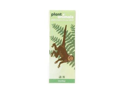 Plant Animals / Spider Monkey