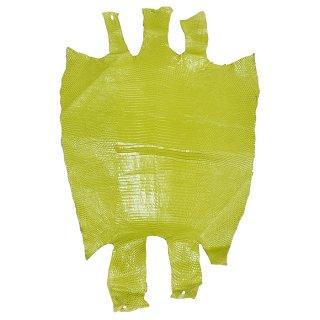 プレミアム・レザー トカゲ革/Lizard(オリーブ)