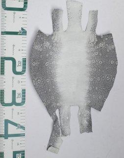 プレミアム・レザー/リングトカゲ(ナチュラル)Pln-38