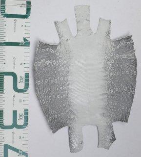 プレミアム・レザー/リングトカゲ(ナチュラル)Pln-36