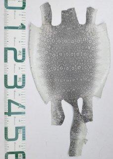 プレミアム・レザー/リングトカゲ(ナチュラル)Pln-07