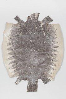トカゲ革/Lizard(ナチュラル)L-79