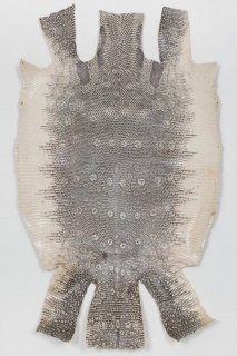 トカゲ革/Lizard(ナチュラル)L-69