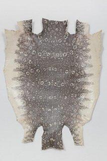 トカゲ革/Lizard(ナチュラル)L-66