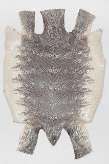トカゲ革/Lizard(ナチュラル)L-55