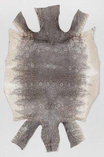 トカゲ革/Lizard(ナチュラル)L-41