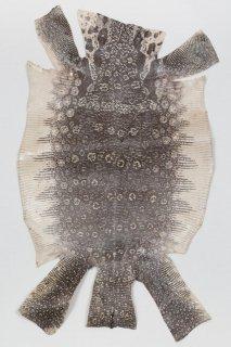 トカゲ革/Lizard(ナチュラル)L-38