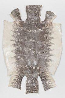 トカゲ革/Lizard(ナチュラル)L-14