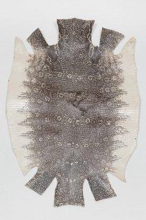 トカゲ革/Lizard(ナチュラル)L-13