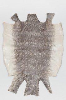 トカゲ革/Lizard(ナチュラル)L-06