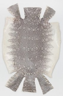 トカゲ革/Lizard(ナチュラル)L-60