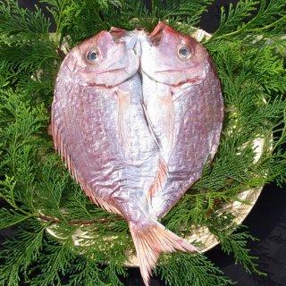 天然鯛のひらき