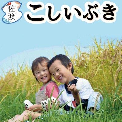 令和2年産 新潟県佐渡産こしいぶき 10kg【送料無料】【普通便】