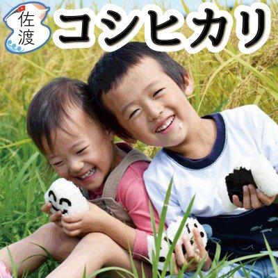 <新米入荷>令和3年産 新潟県佐渡産コシヒカリ 特別栽培米 20kg【送料無料】【普通便】