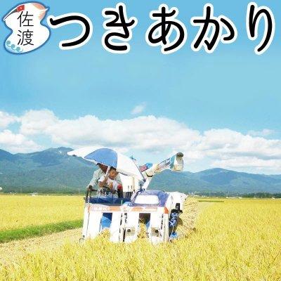令和2年産 新潟県佐渡産つきあかり 15kg【送料無料】【普通便】