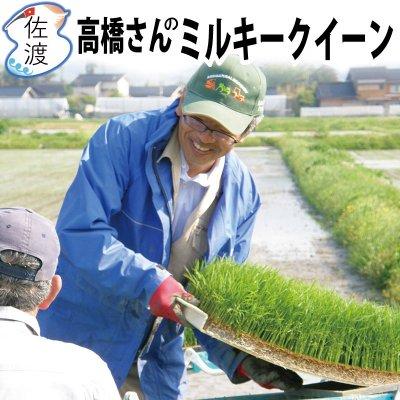 令和2年産 新潟県佐渡産ミルキークイーン 15kg【送料無料】【普通便】