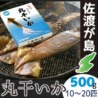 佐渡産 丸干しいか 500g【クール冷凍便】