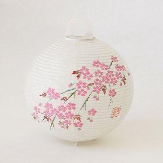 レター提灯/ギフト提灯 桜