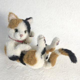 【抽選販売】三毛猫「Calico(キャリコ)」