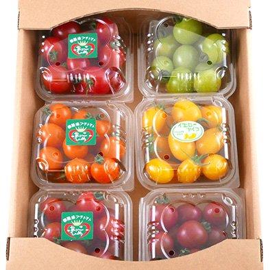ミニトマト6パック入りギフトボックス