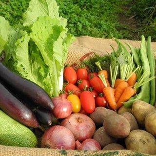 週に3セットのみ限定販売 有機無農薬野菜Lセット
