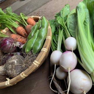 旅風農園の旬の野菜セット