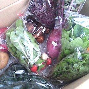 農業人 坂尻ハジメの季節のおまかせ野菜セット