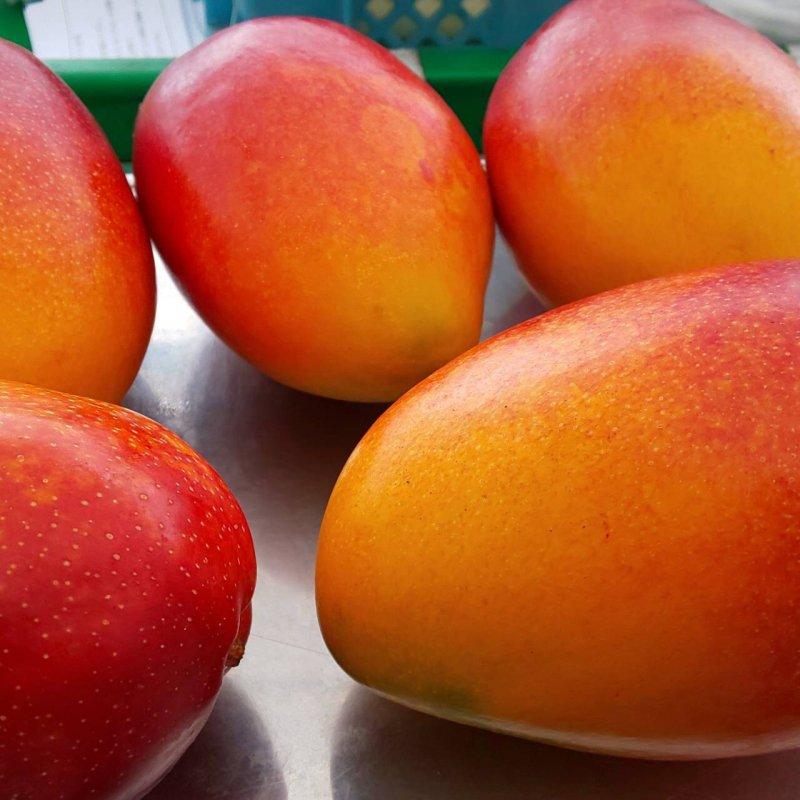 美食家を唸らせる、魅惑な甘さのマンゴー【スタンダードset】