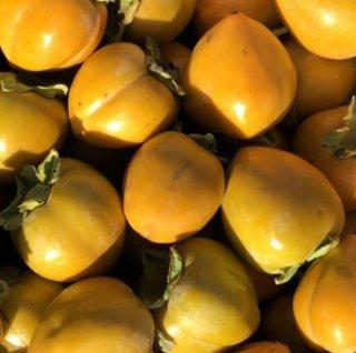 静岡生まれの「四つ溝柿」アルコール渋抜き済み10kg