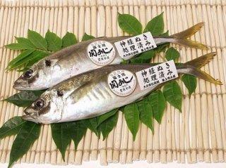 極上 幻の一本釣りアジ 関アジ 8尾