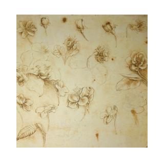 ジクレ—版画 レオナルド・ダ・ヴィンチ 『Study of Flowers』 アートシート 送料無料