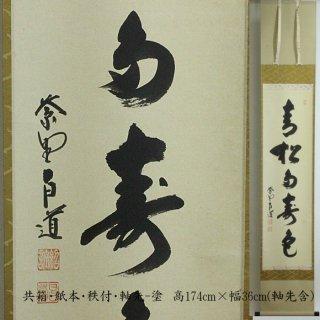 「青松多寿色」一行書 軸  前田昌道筆