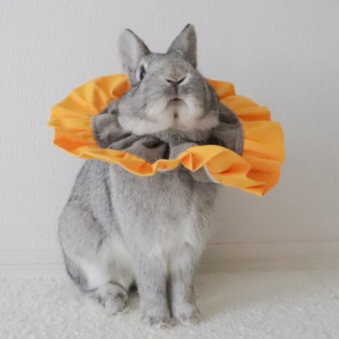 うさぎさんがごろんちょ出来る快適エリザベスカラー ひまわりのエリマキさん Lサイズ | うさぎハート