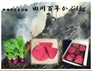 田川百年かぶ 1kg